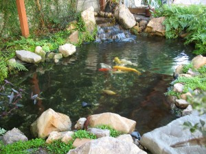 beautiful fishpond