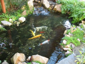 cool fishpond